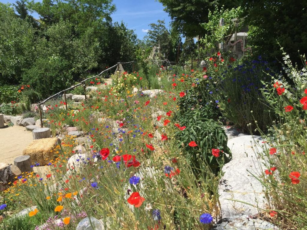 Amphitheater-with-poppies